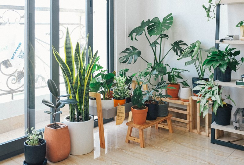 How_to_Choose_the_Right_Plant_for_Your_Home