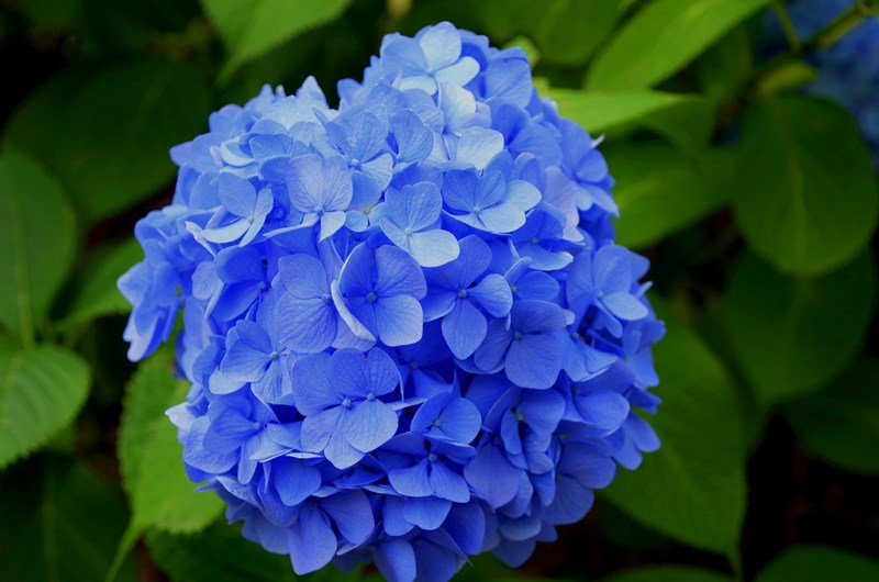 beautiful-blooming-blossom-blue-414510